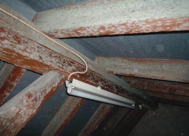 Top Sanierung von Schimmelpilzschäden an Dachstühlen KD93
