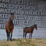 Wildpferde vor dem Buzludzha-Monument