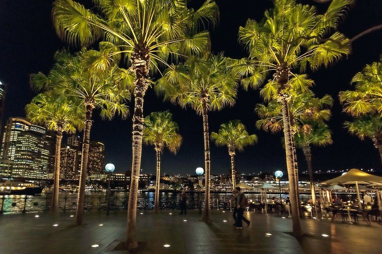 Palm_Trees_Circular_Quay_East,_Sydney_NSW_2000,_Australia_Latitude:_-33.859591_Longitude:_151.212824